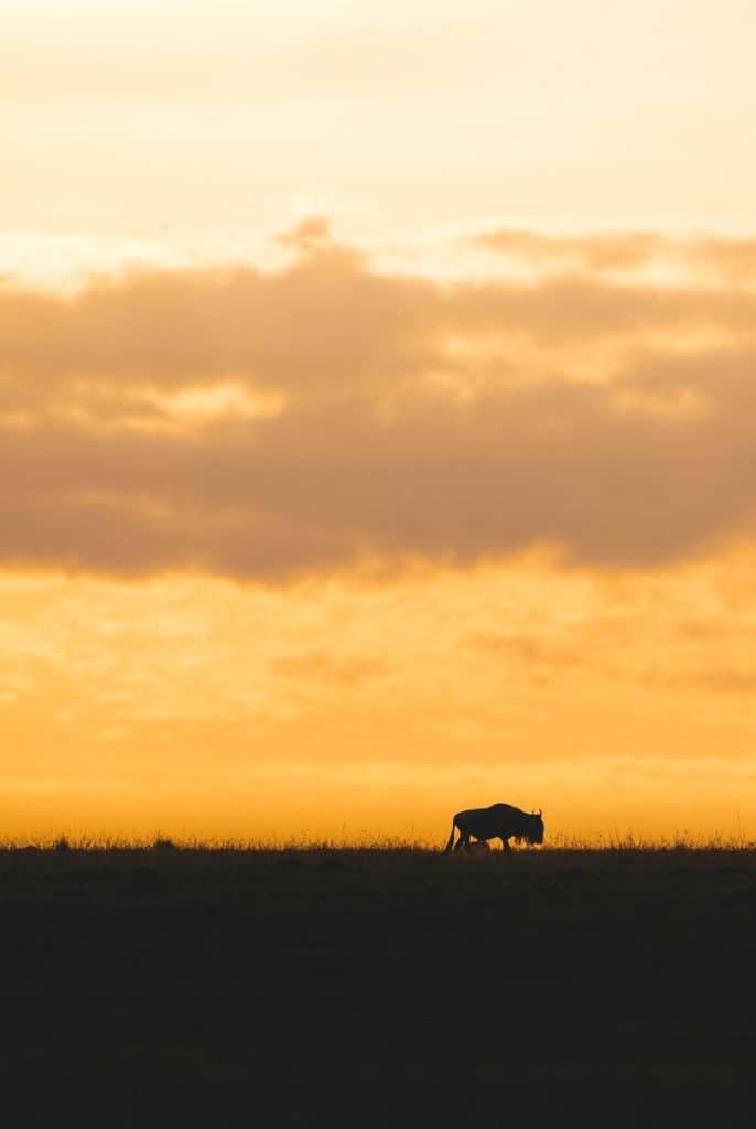 safari vest