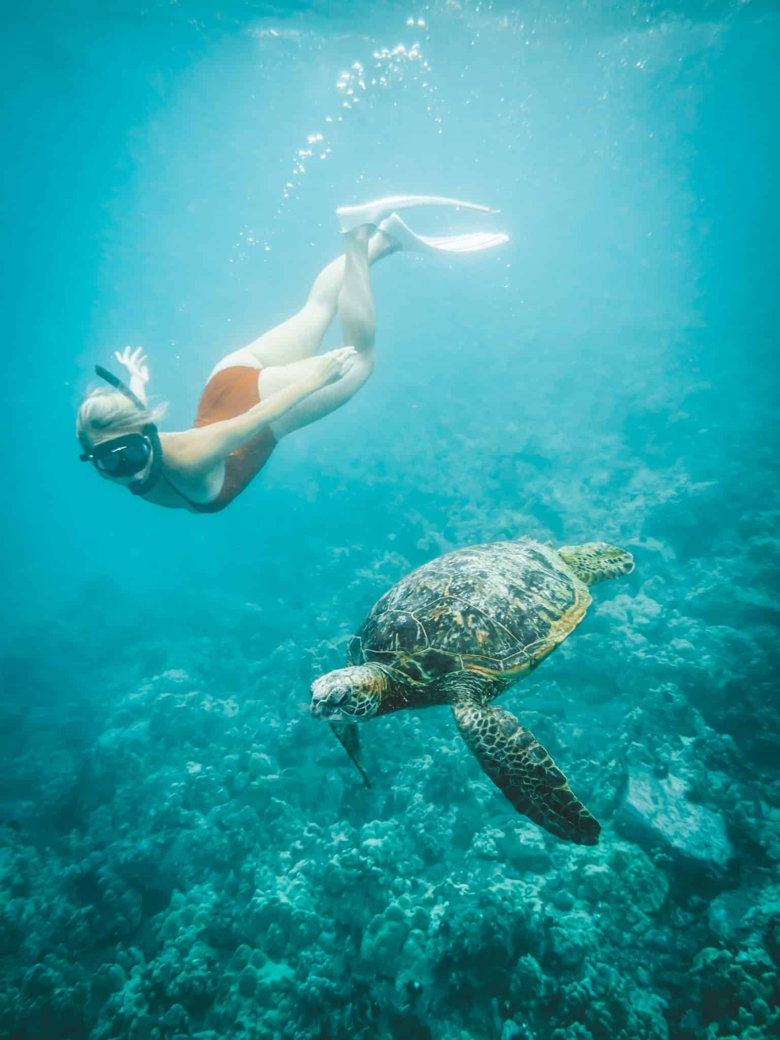Things to do in Maui - Swim with sea turtles