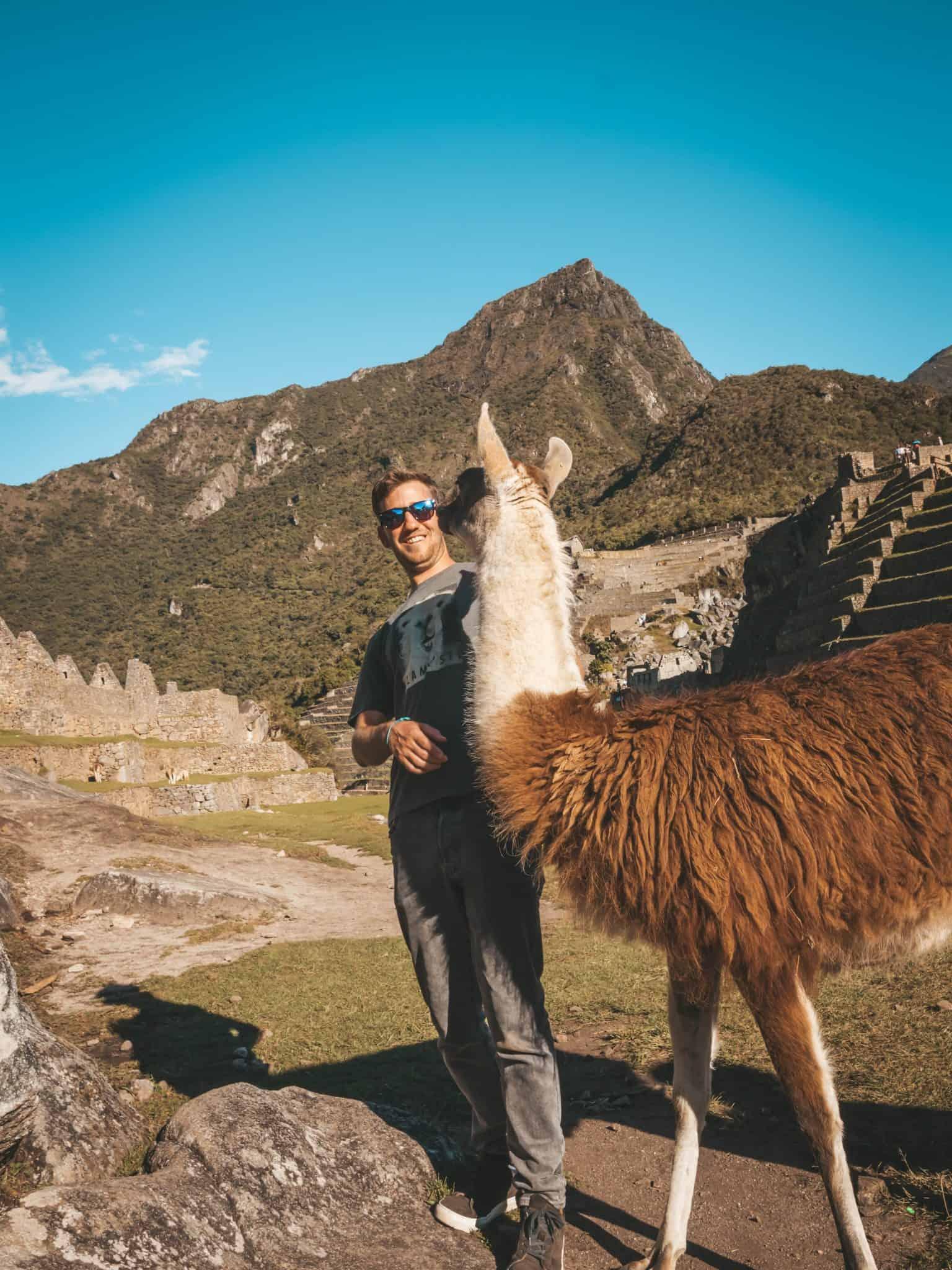 Things to do in Cusco - Llama