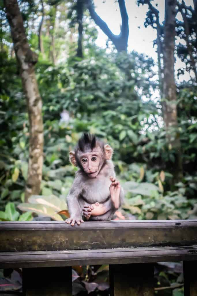 Ubud Monkey Forest11