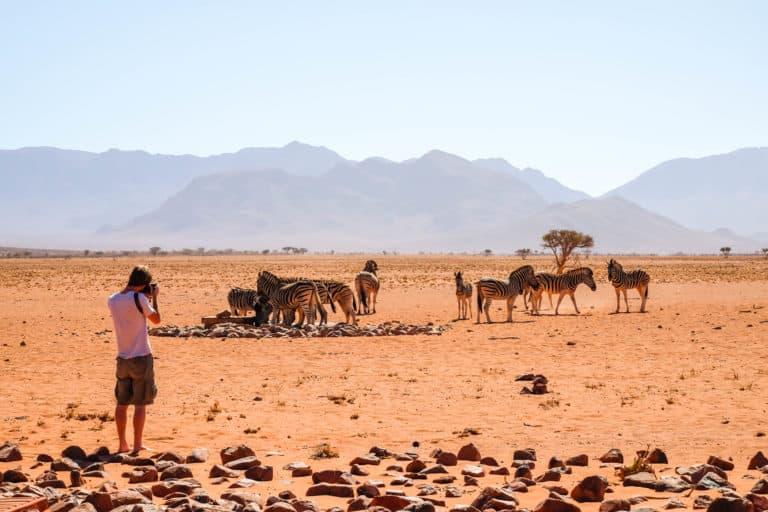 Africa Safari Shorts
