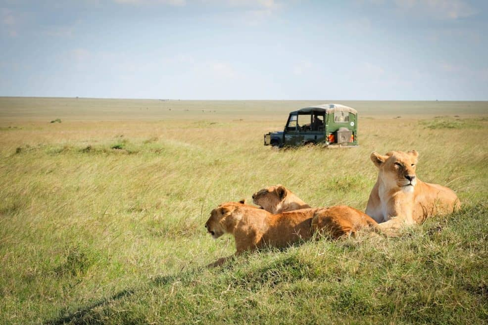 36 African Safari Animals To See Where To See Them