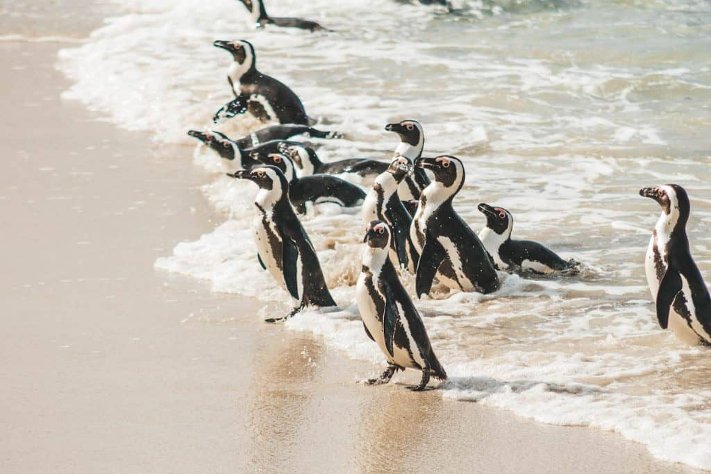 Things to do in Cape Town - Boulders Beach