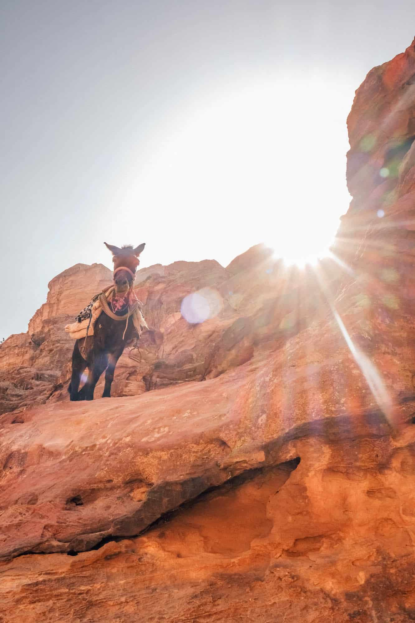 Travel in Jordan - Donkey Petra