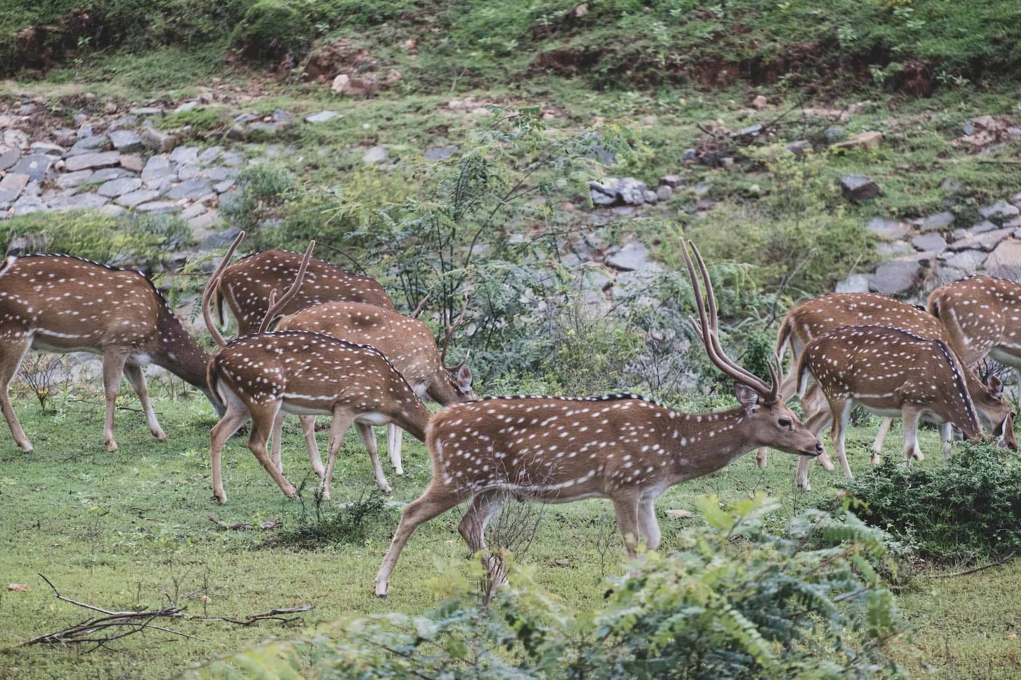 Sri Lanka Safaris