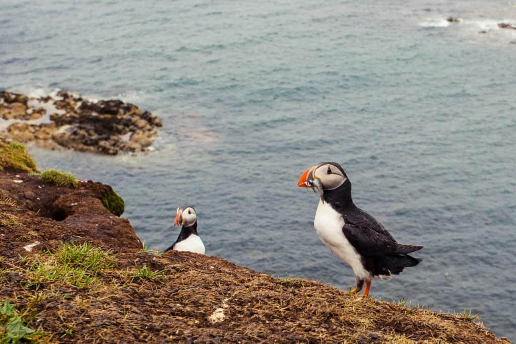 Ethical Wildlife Encounters