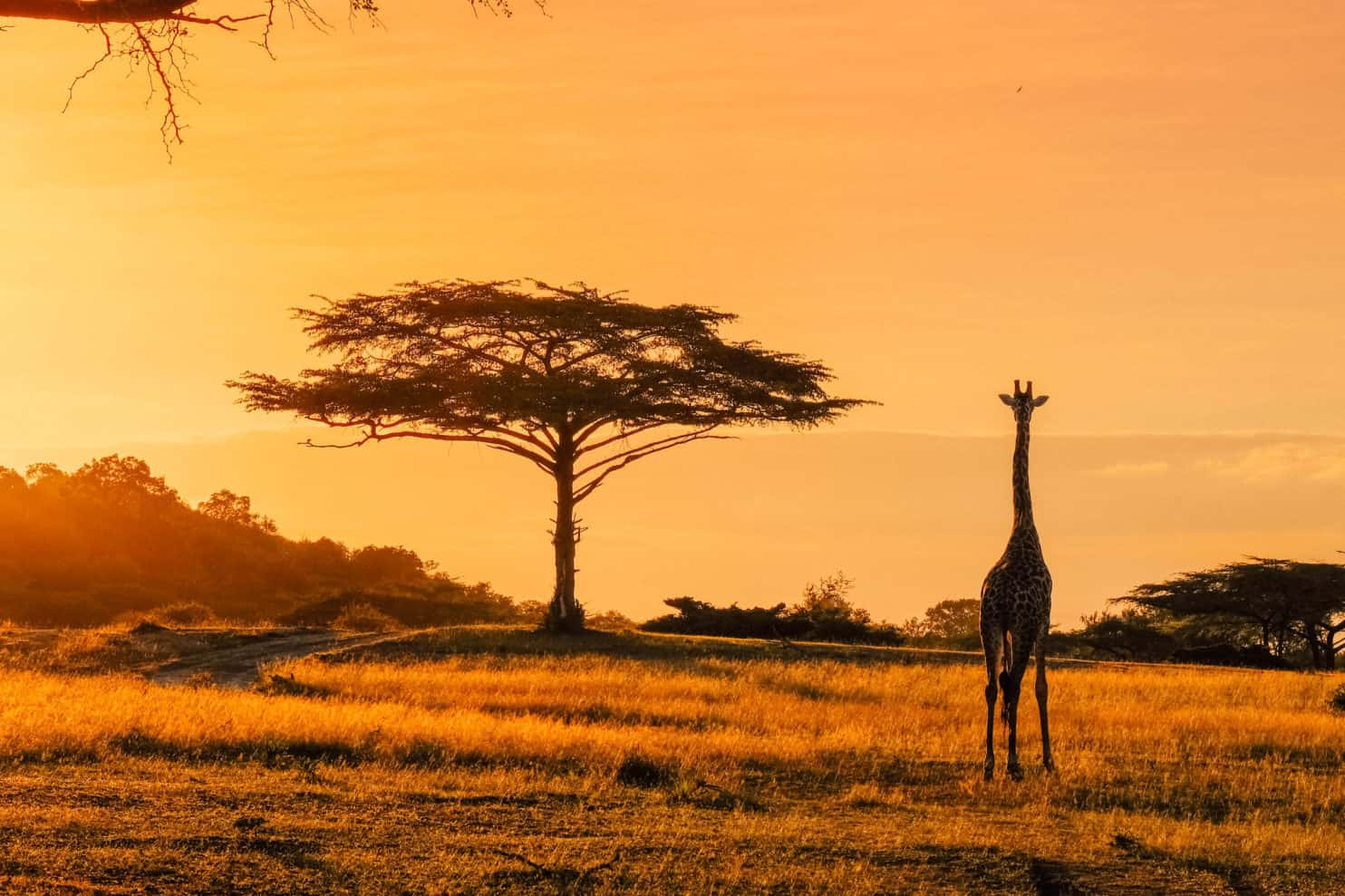 Africa Travel Tips