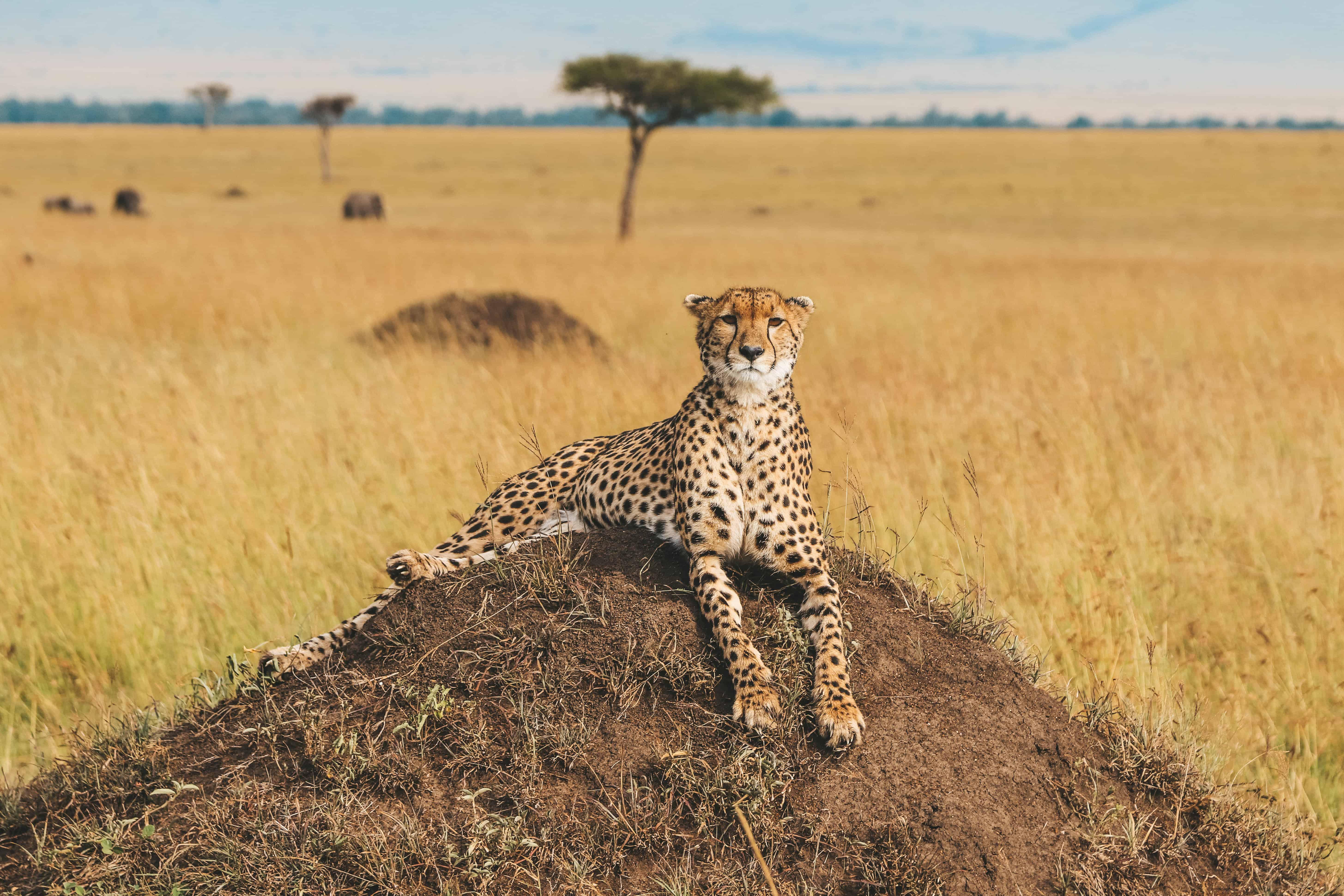 How to plan a safari