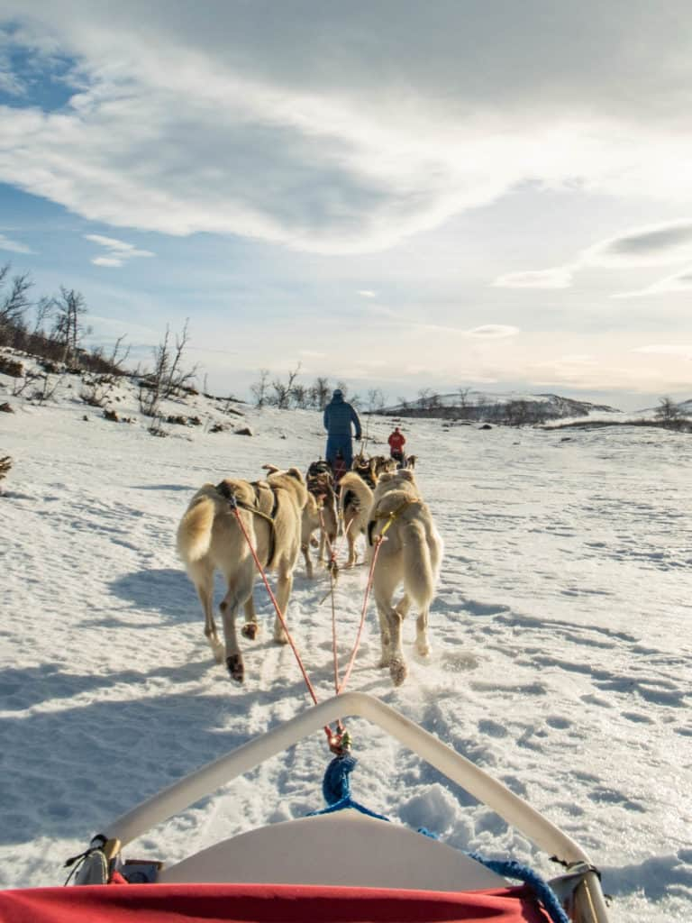 Behind the Dog Sled — Winter in Norway