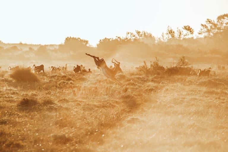 Roadtripping Africa