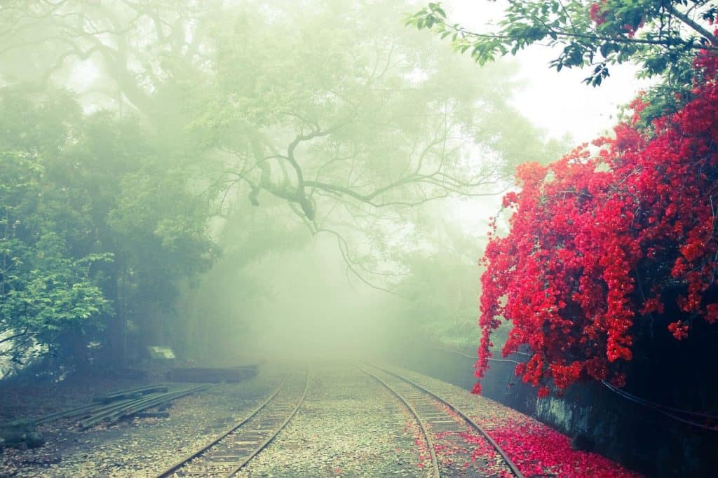 Travel Taiwan - Alishan Forest Railway