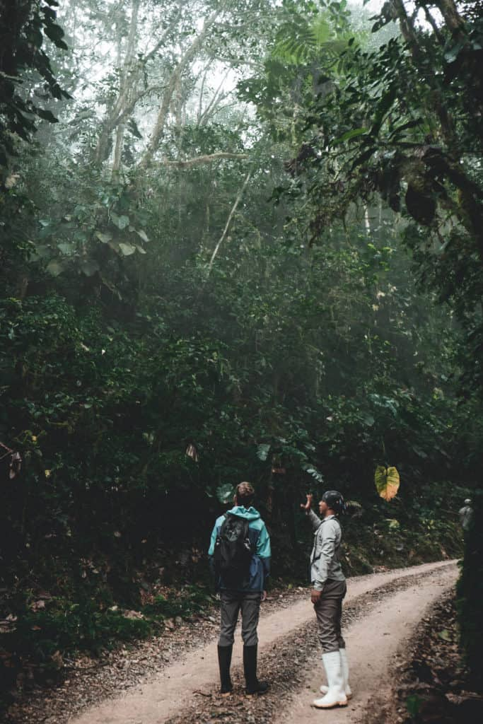 What to Pack Hiking - Jungle