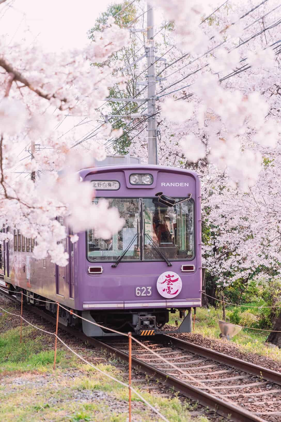 Sakura Things To Do in Kyoto