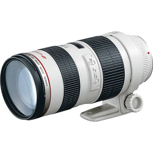 Best Lens For Safari