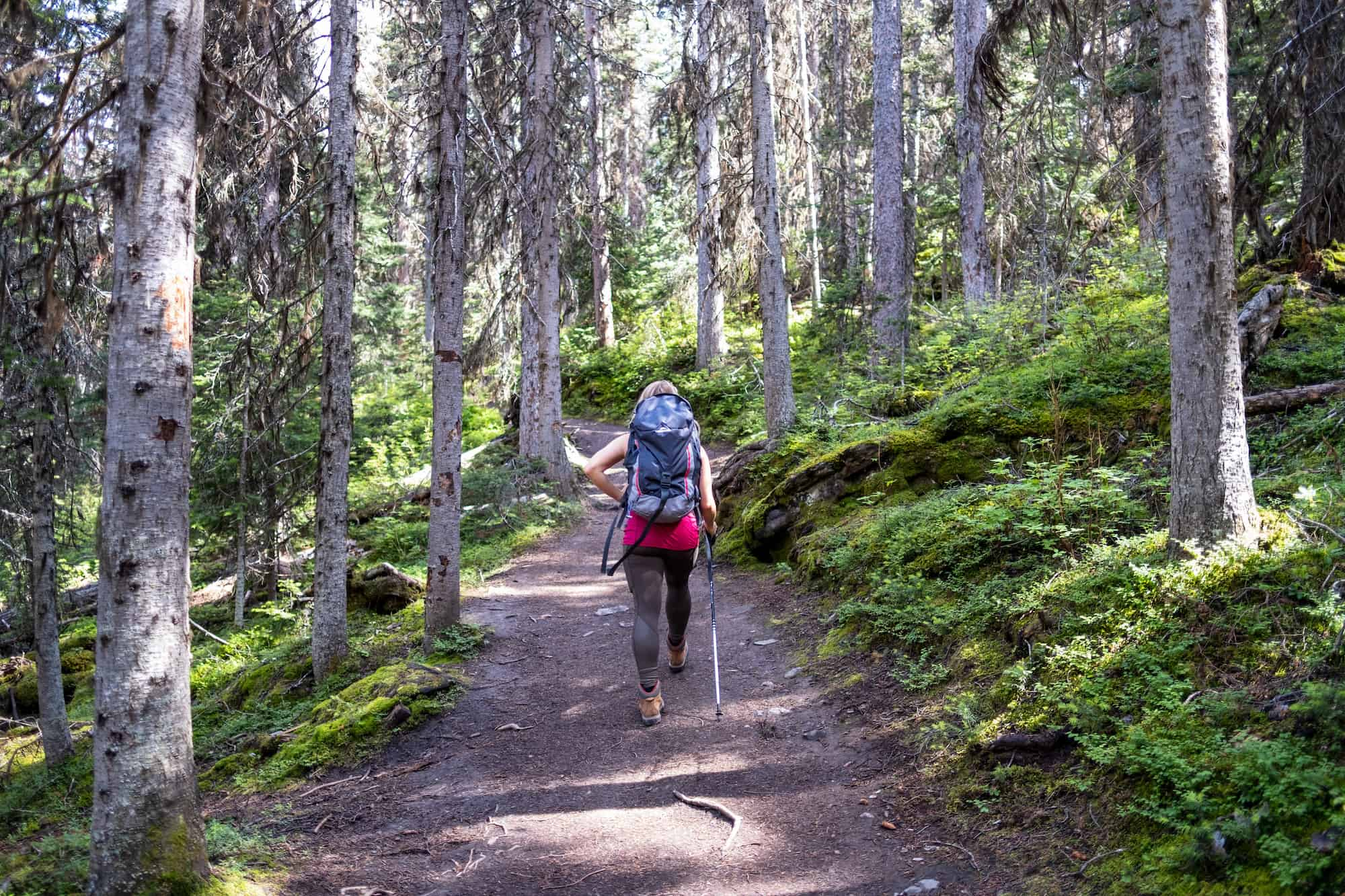 Trail Through Forest To Rawson Lake