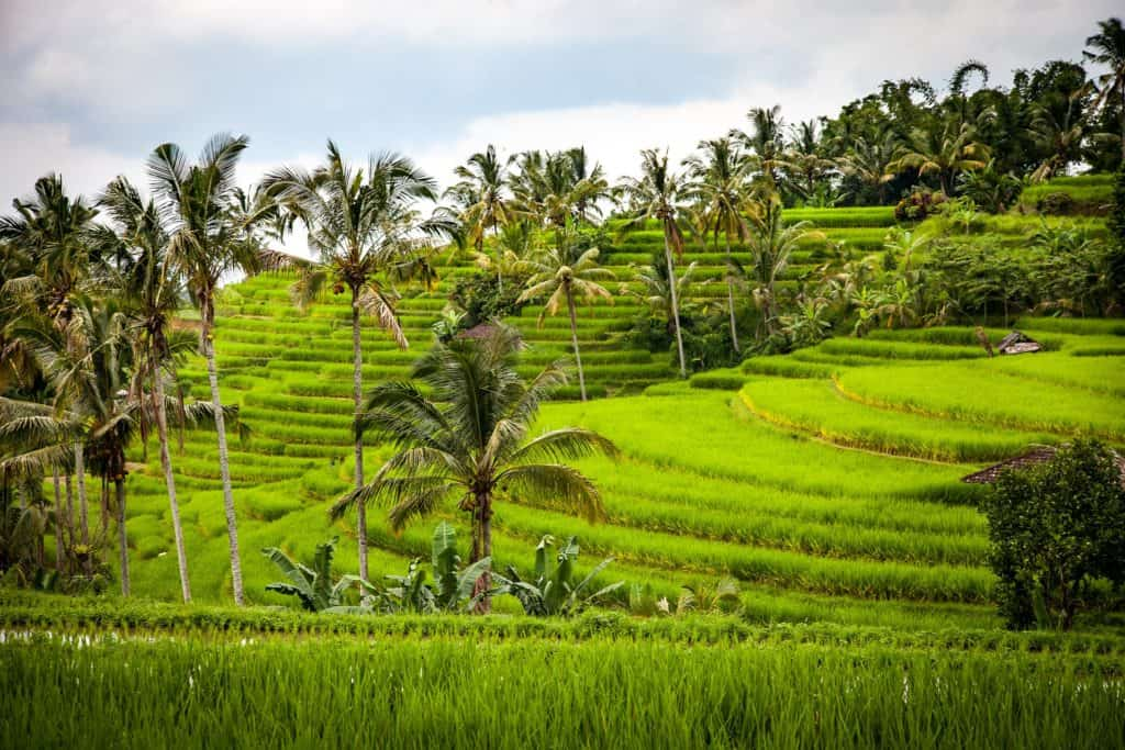 Things to do in Bali Jatiluwih