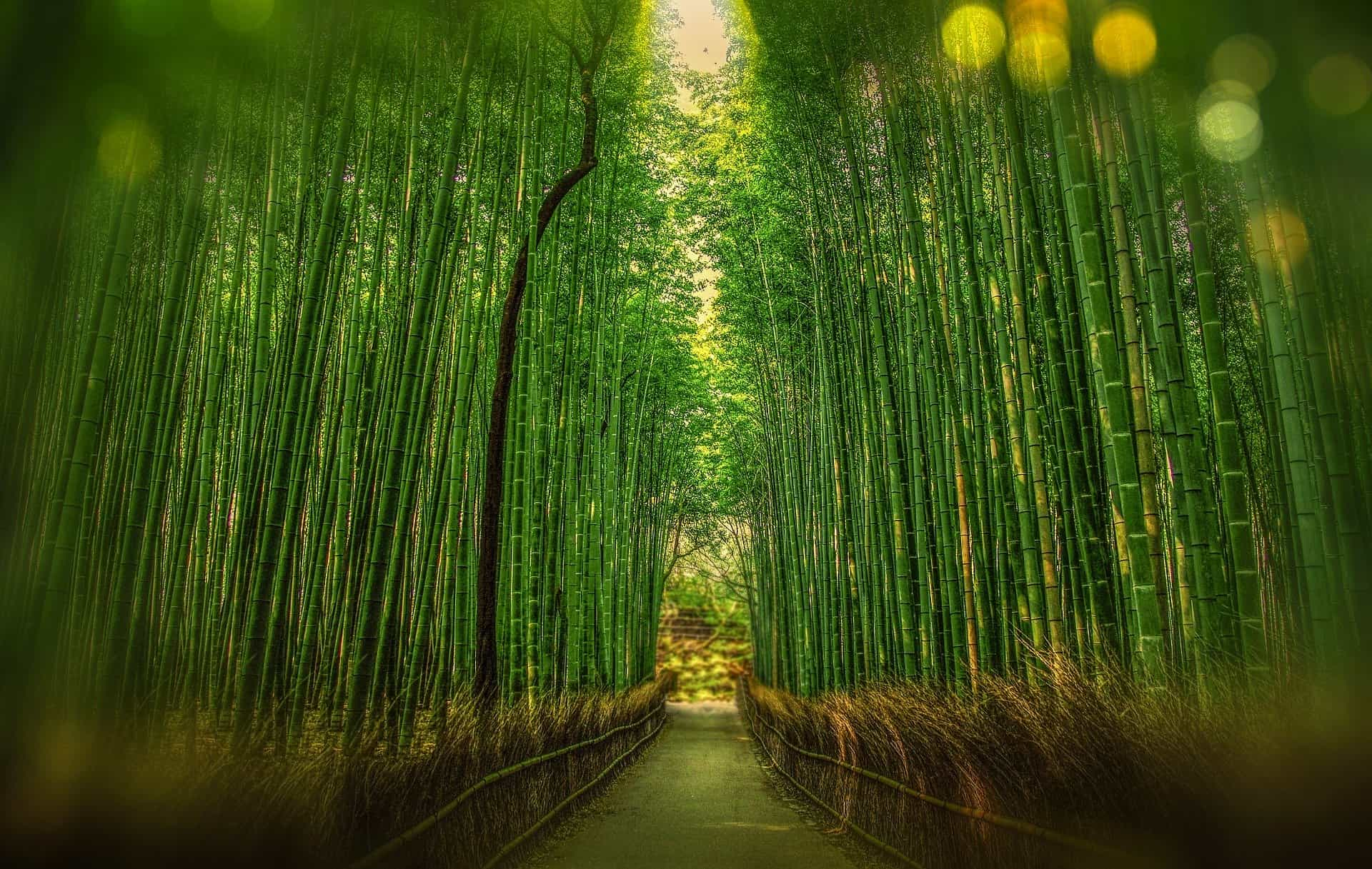 Bamboo Forest Things To Do in Kyoto