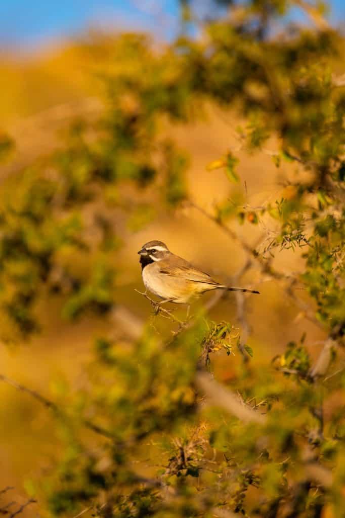 Bird in Desert Weekend in Tucson