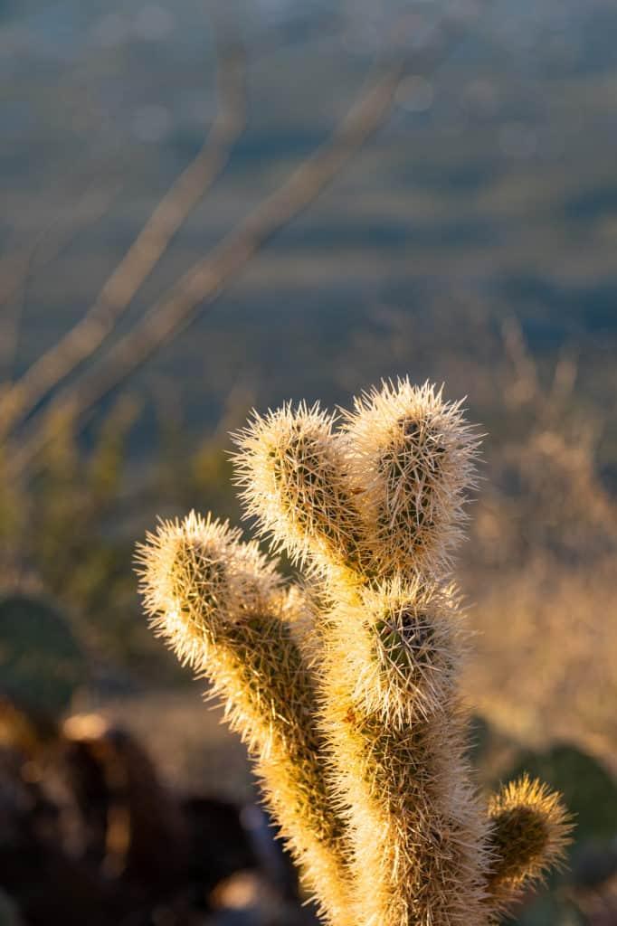 Cactus Weekend in Tucson