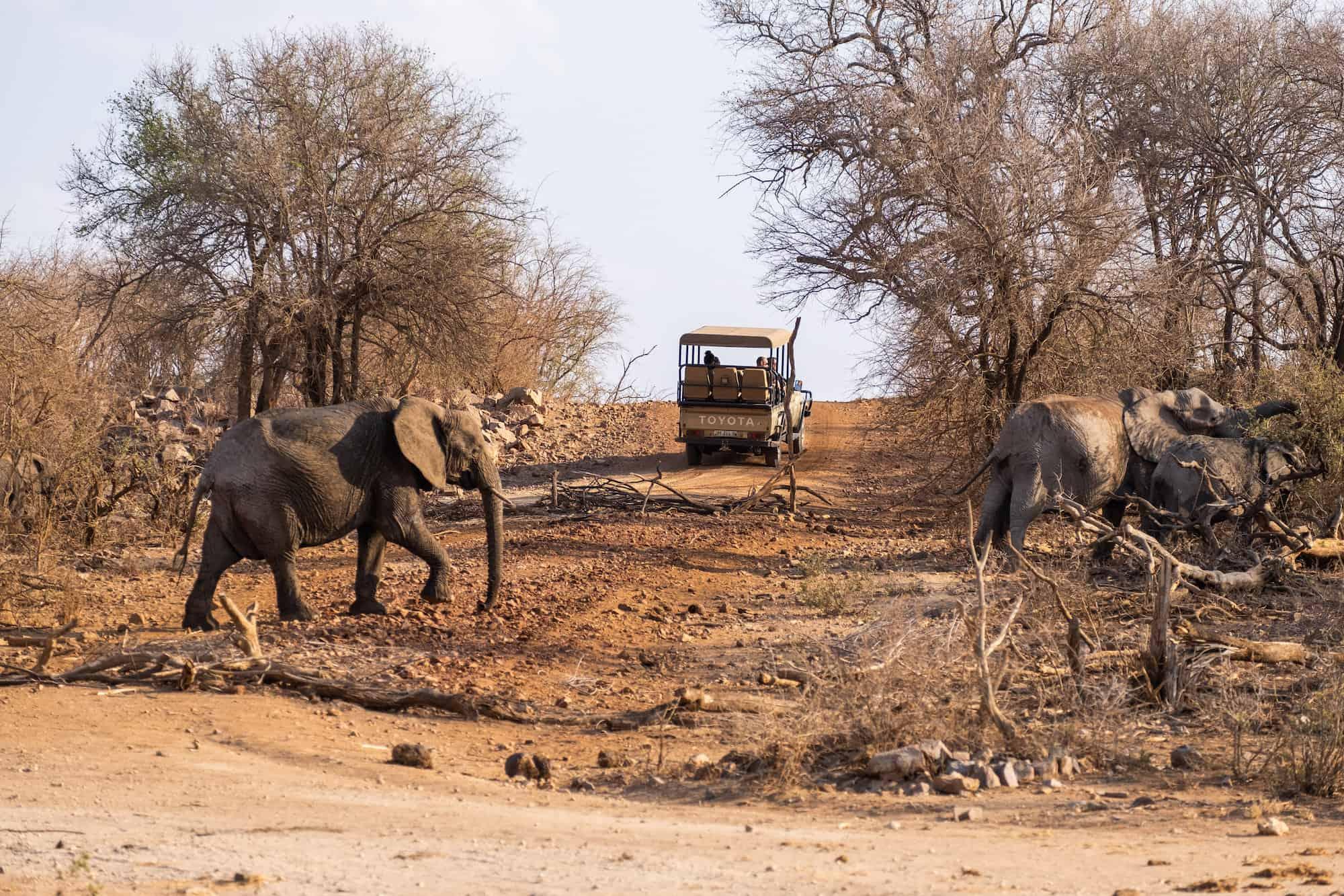 Elephants on Madikwe
