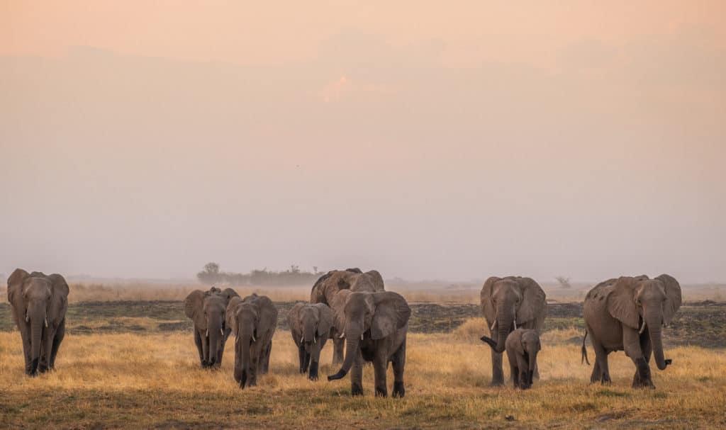 Linyanti - Botswana