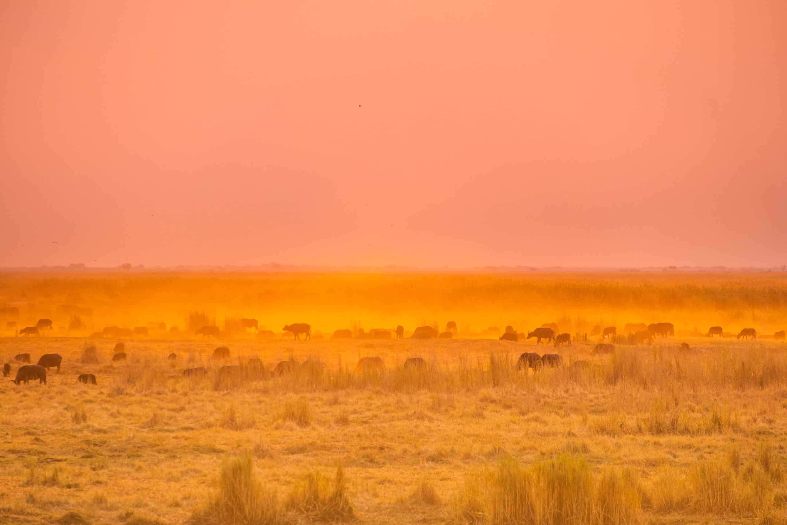 Best Safari in Africa