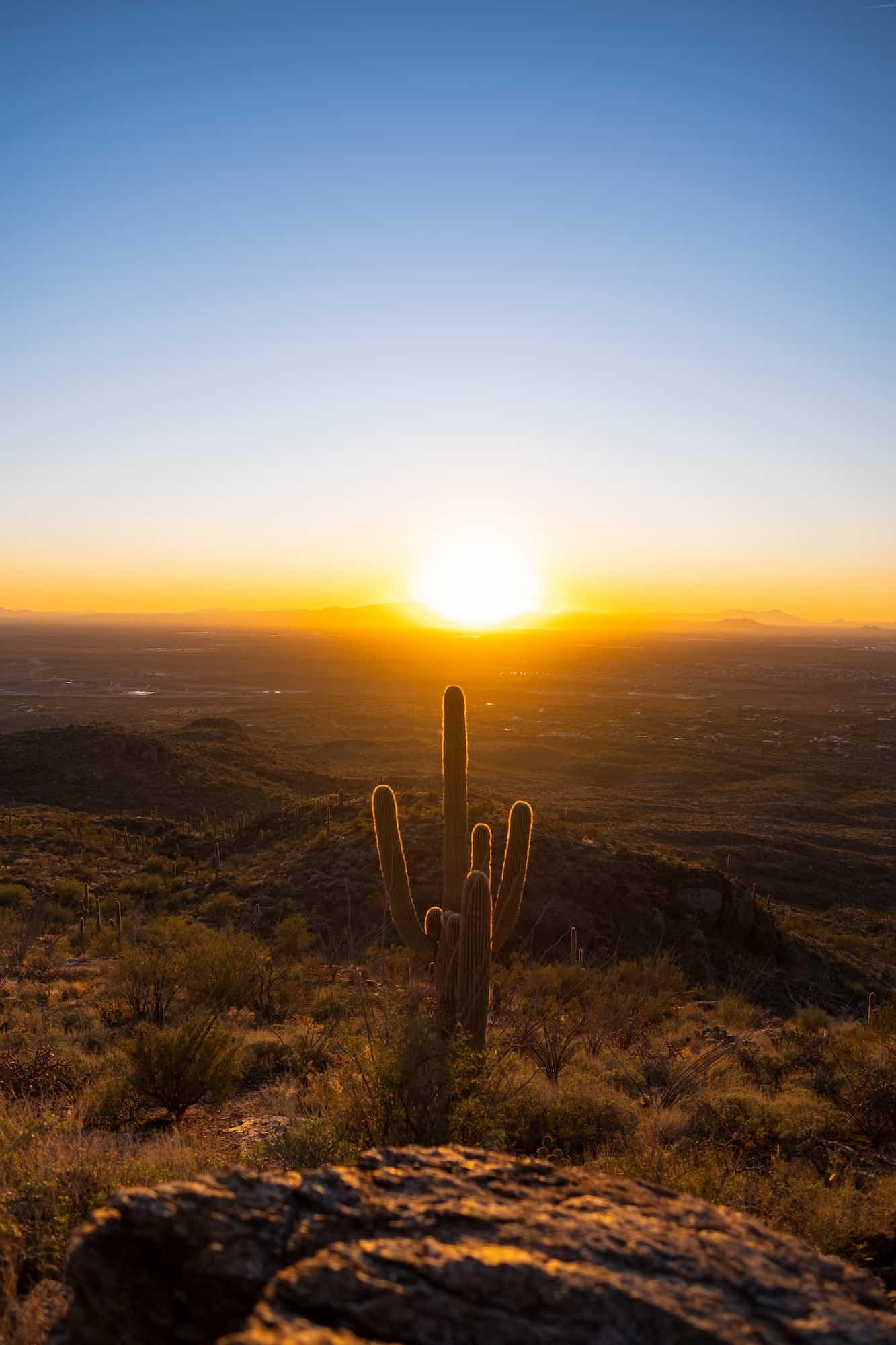 Saguaro Sunset Weekend in Tucson