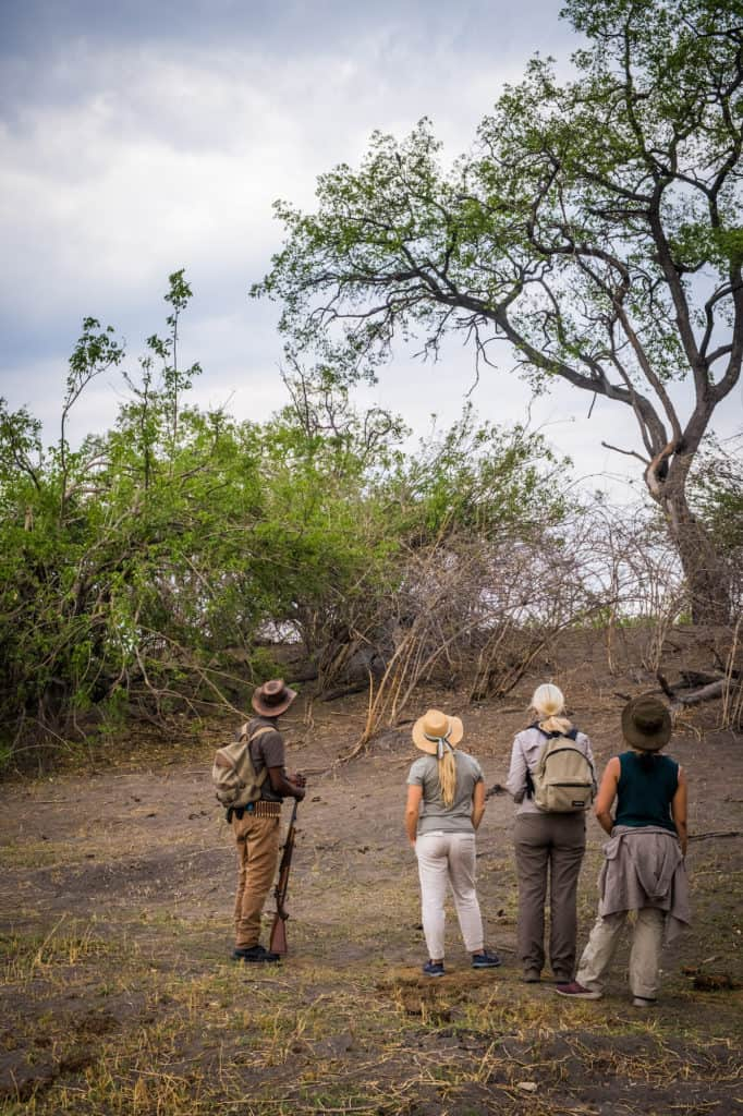 Walking-Safari-Botswana-Linyanti-Expedititons