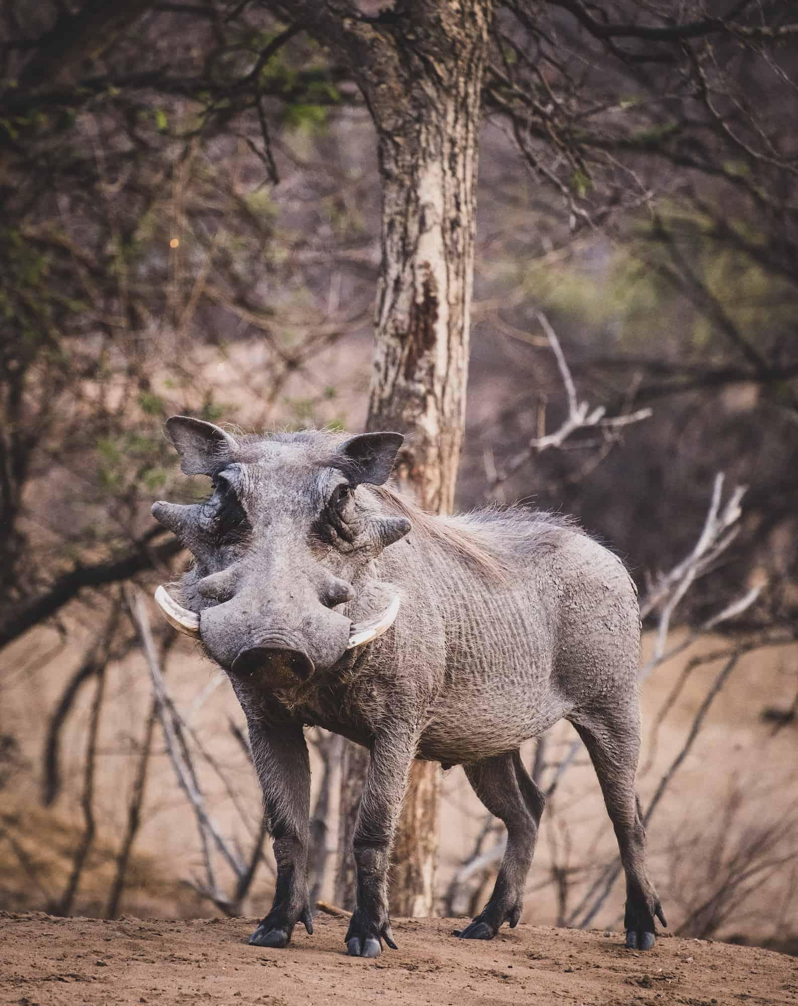 Ant's Hill Horseback Safari