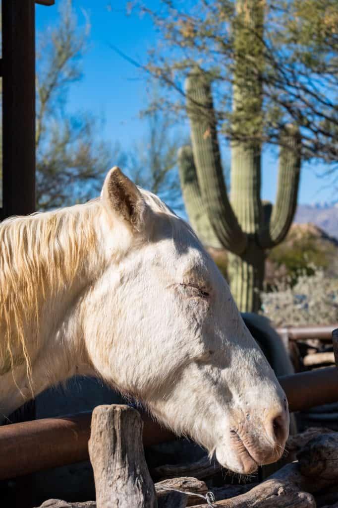 Horse Weekend in Tucson