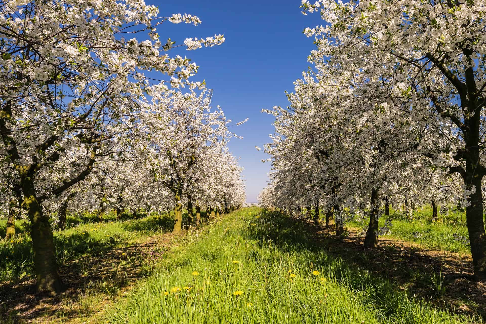Spring Time Best Time Visit Canada