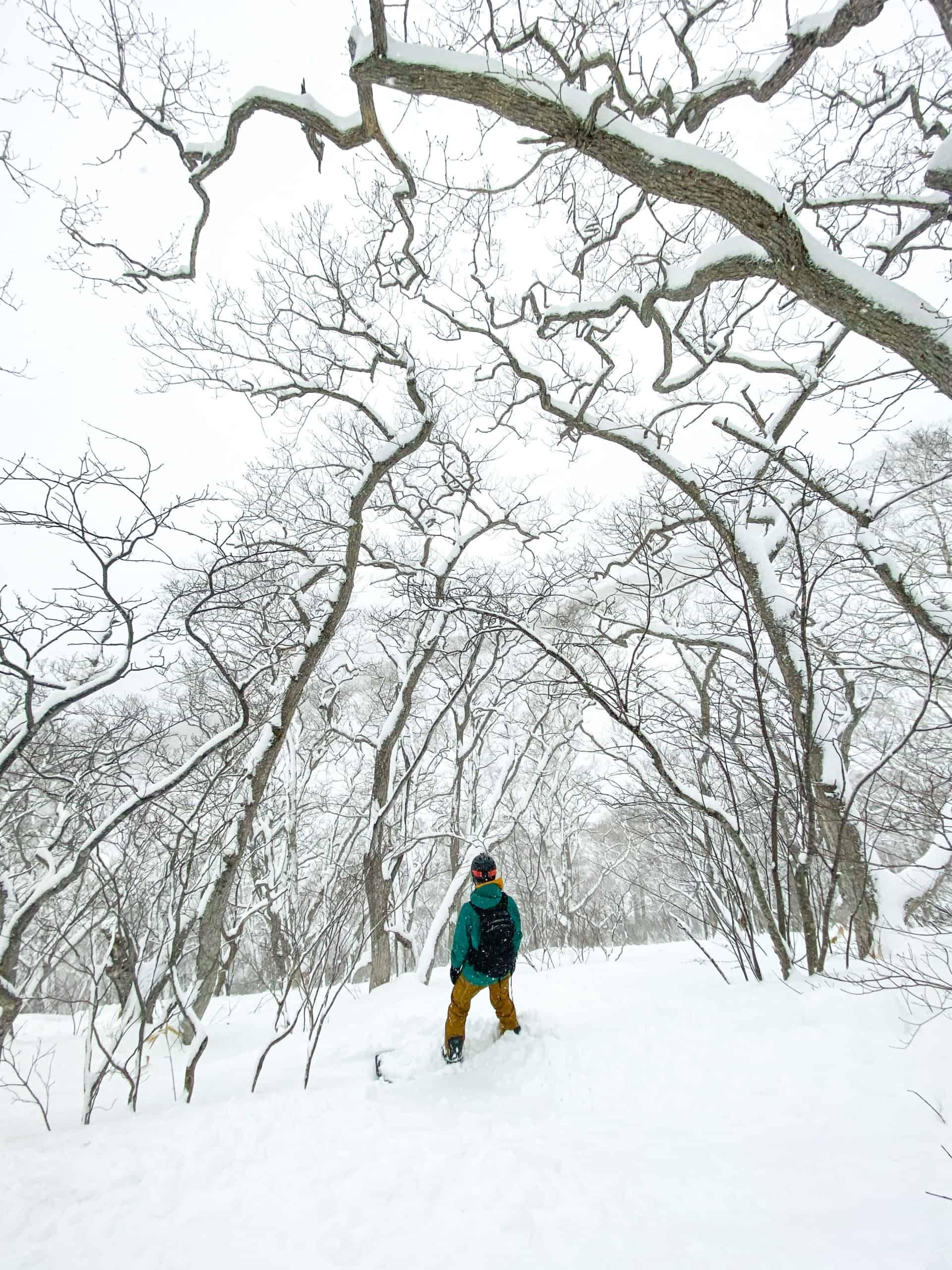 Cameron Standing in Niseko Annupuri Trees