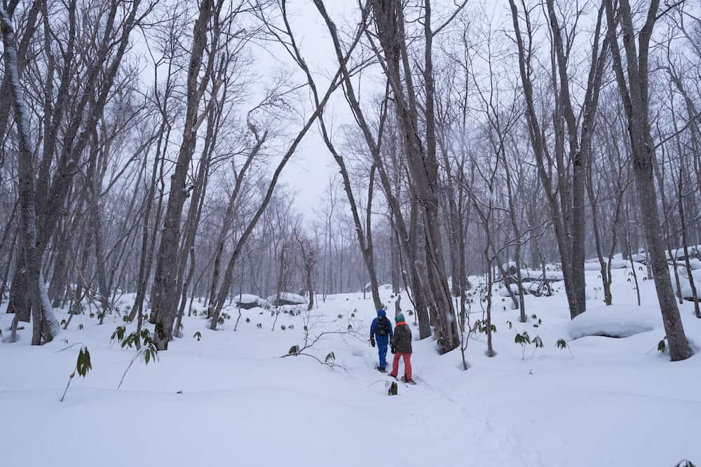 Walking through the woods with snowshoes