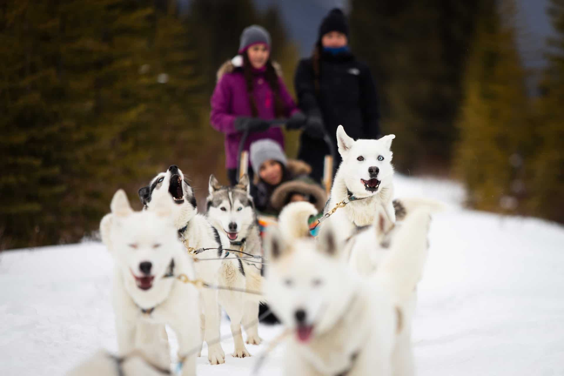Dog-Sledding-in-Spray-Valley-Alberta