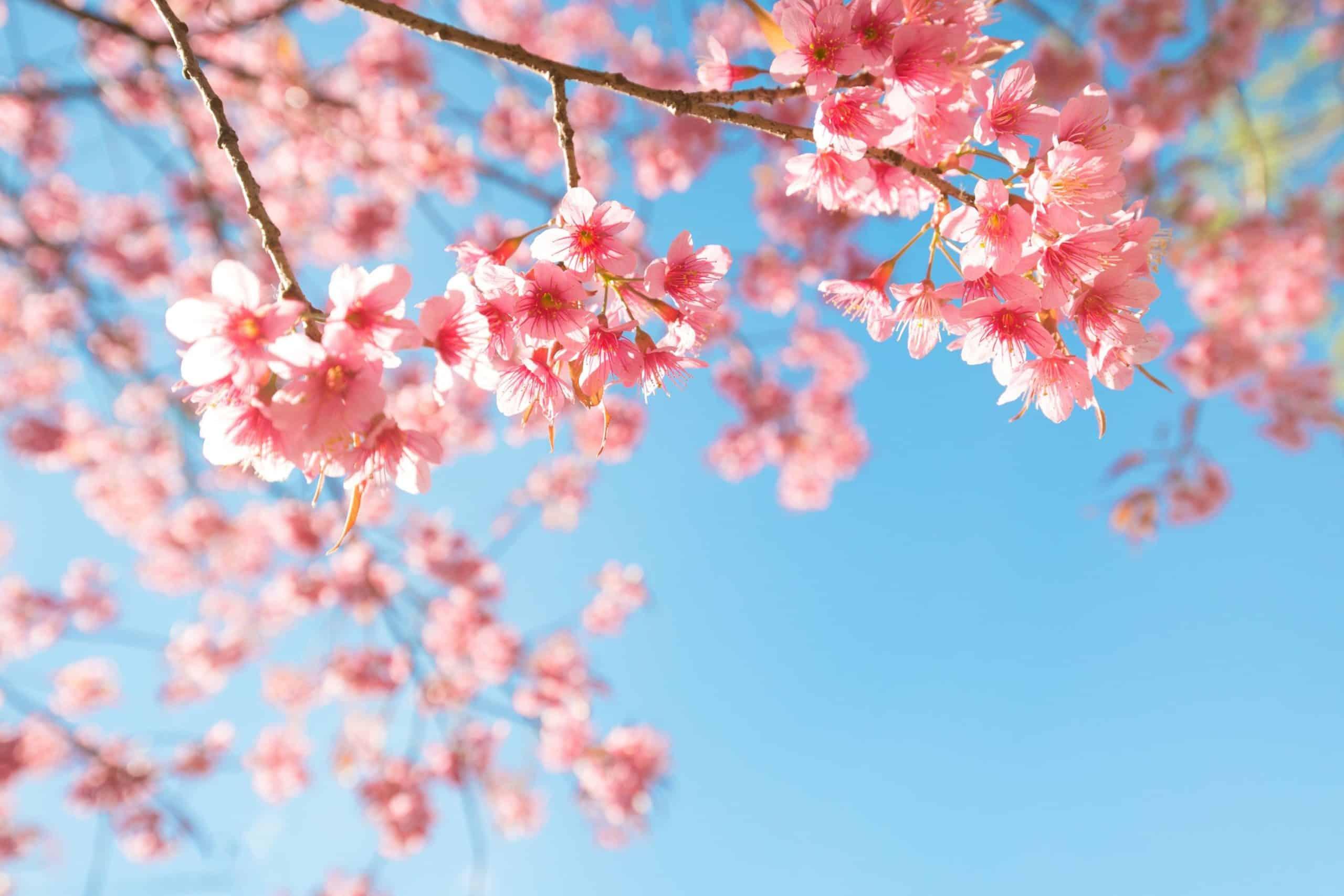things to do in sendai - Japan