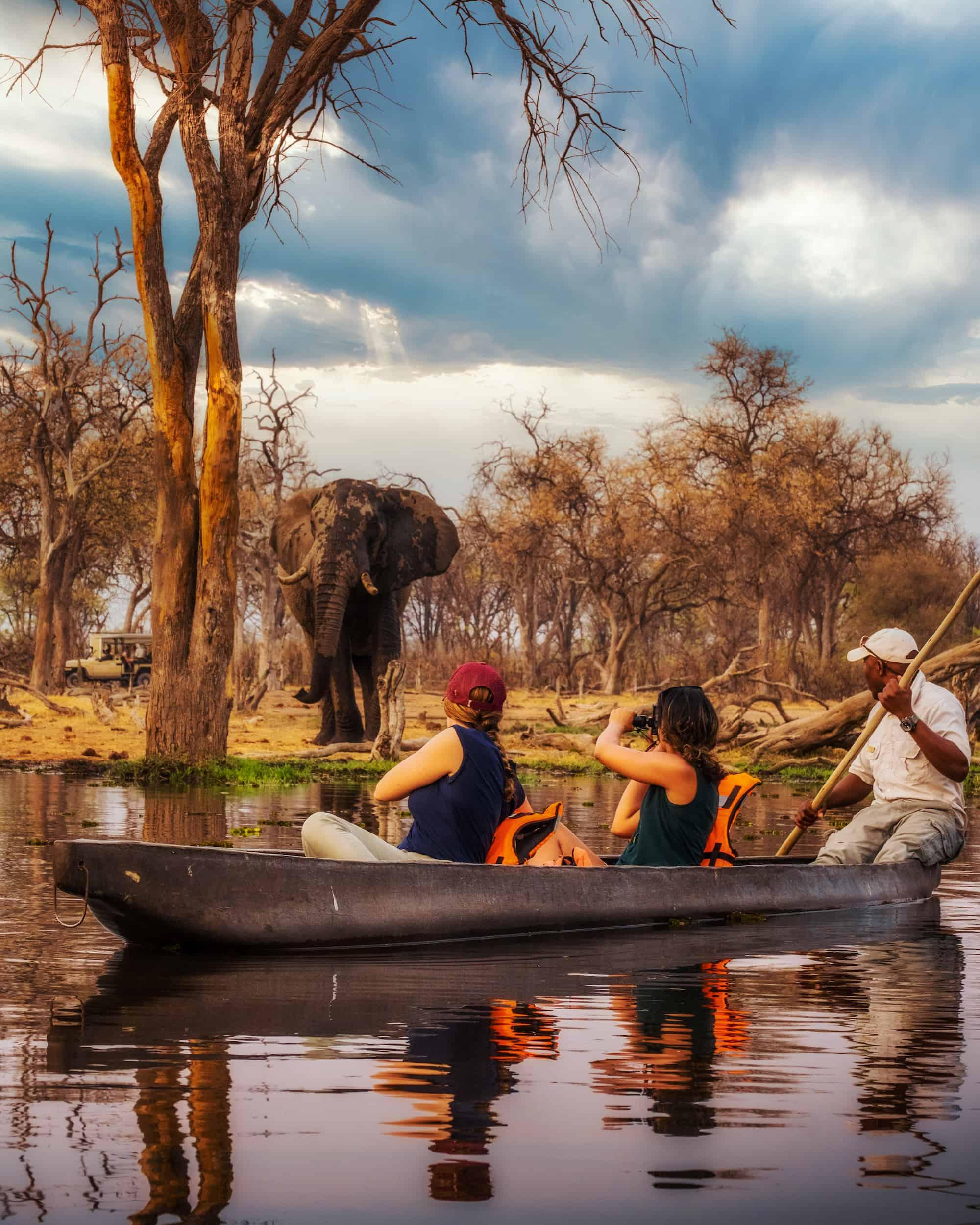 safari quotes