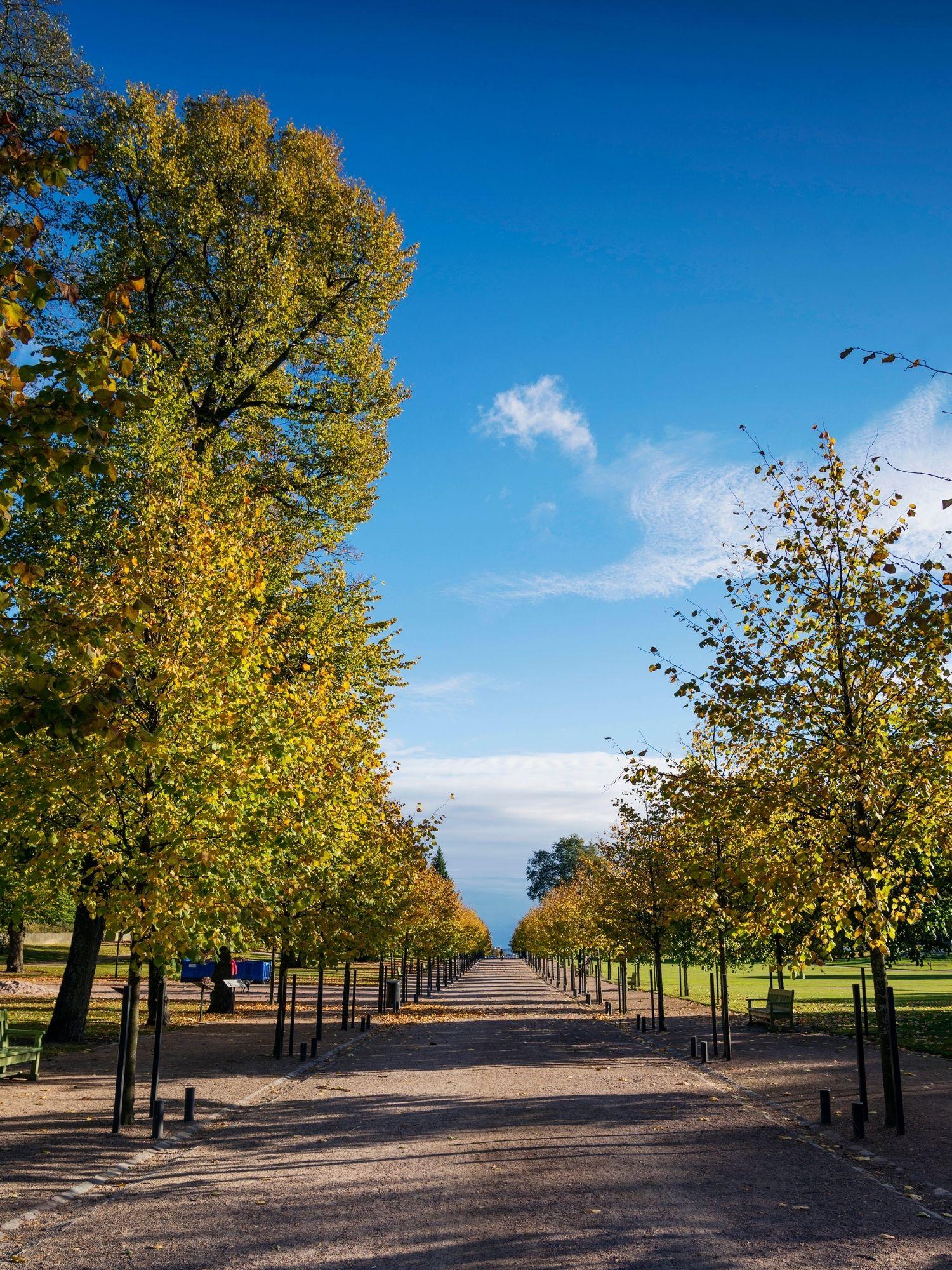 Helsinki Tree Lined Park