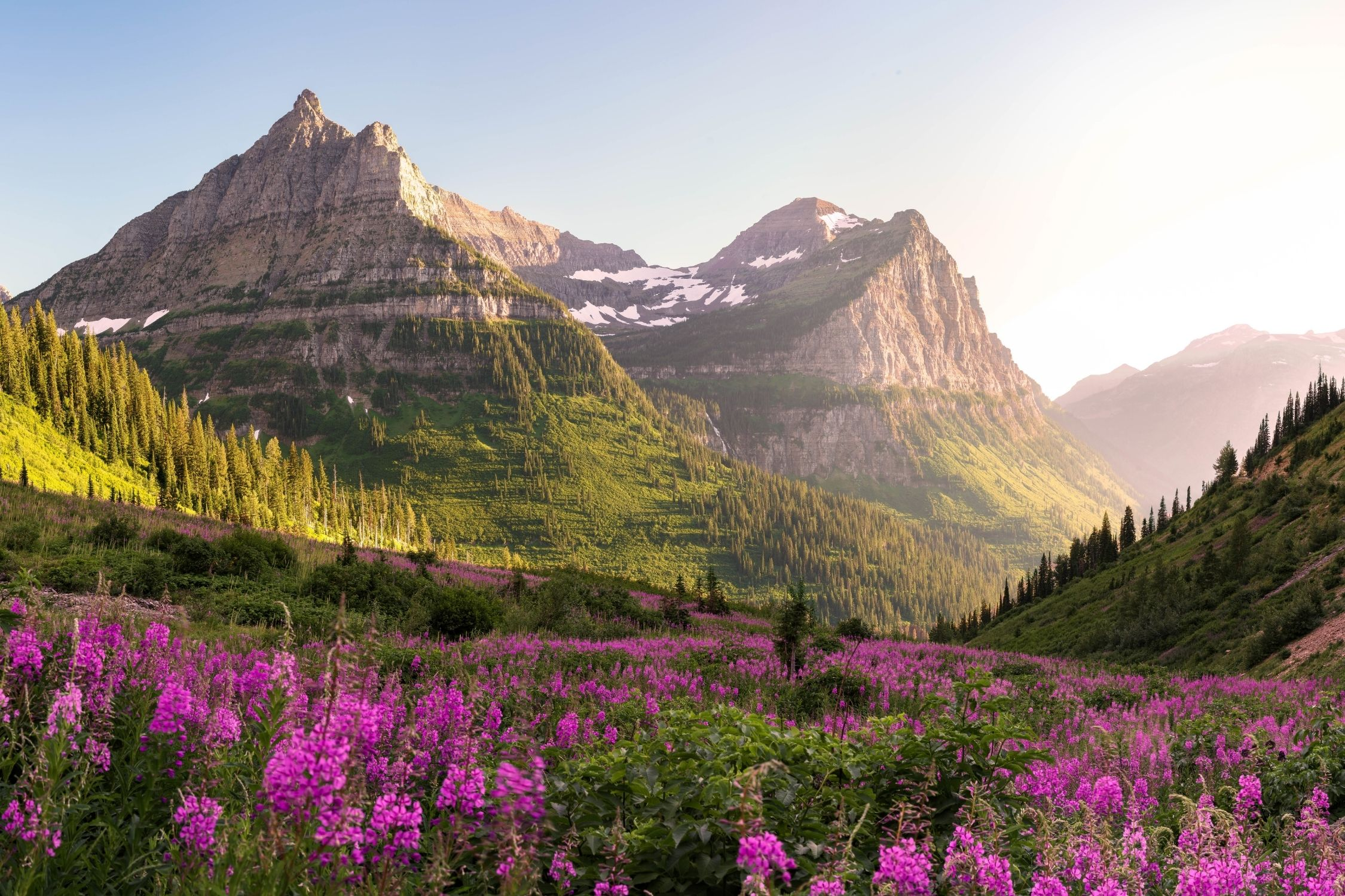 Glacier National Park in Montana at Sunset with Fireweed