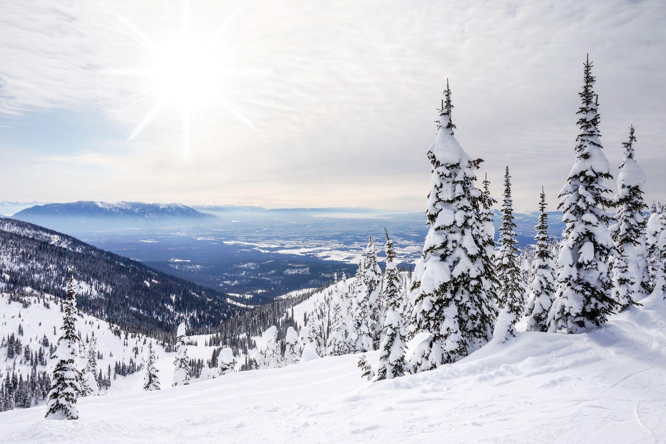 Snow Covered Tree Run At the Whitefish Ski Resort