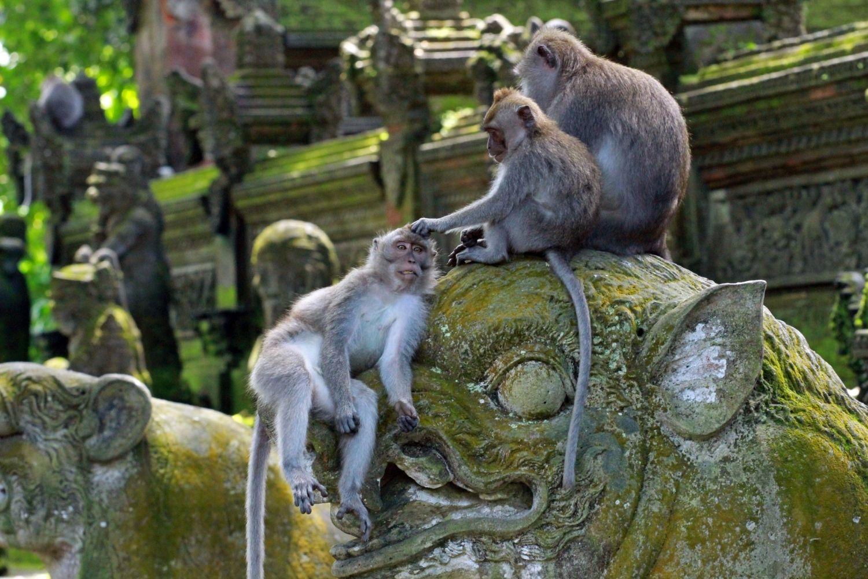 Visiting Ubud Monkey Forest