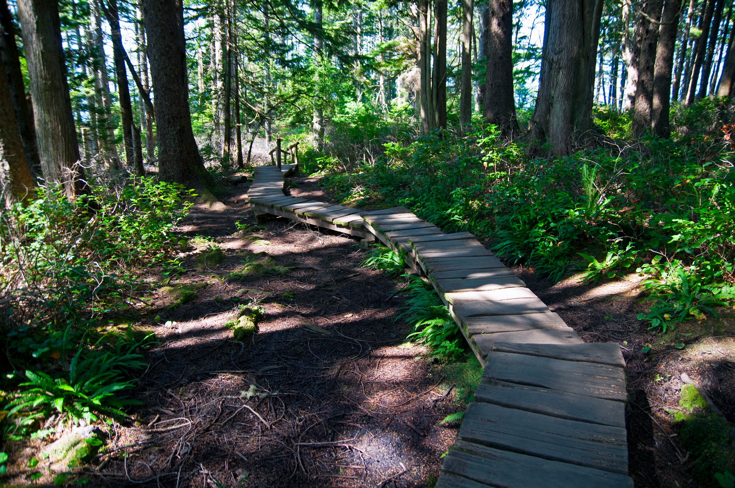 Boardwalk through the forest in Olympic National Park: Places to visit in Washington