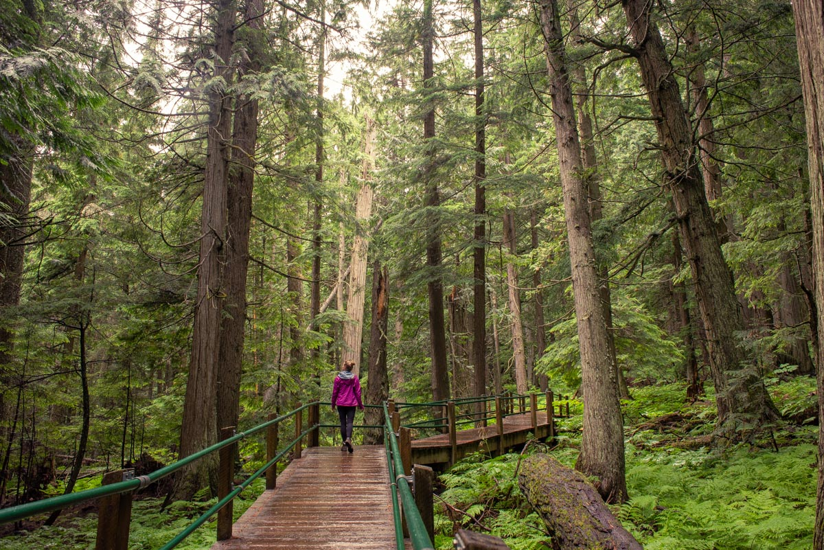 walking through the giant cedars boardwalk trail