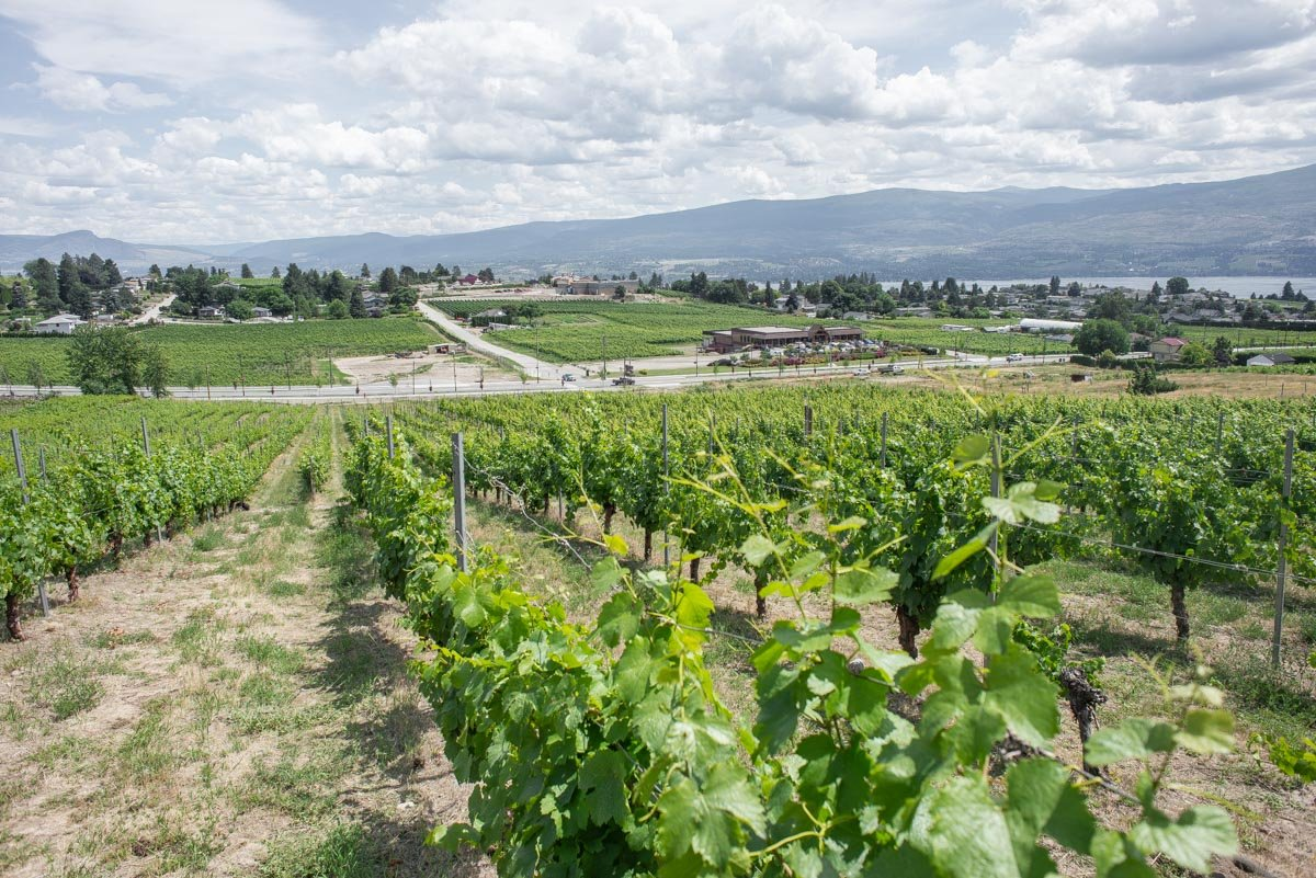 winery in kelowna view