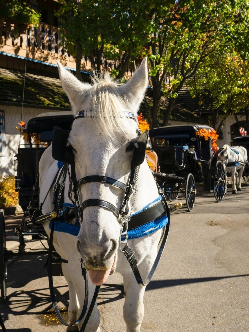 Horse drawn carriage in Frankenmuth Michigan