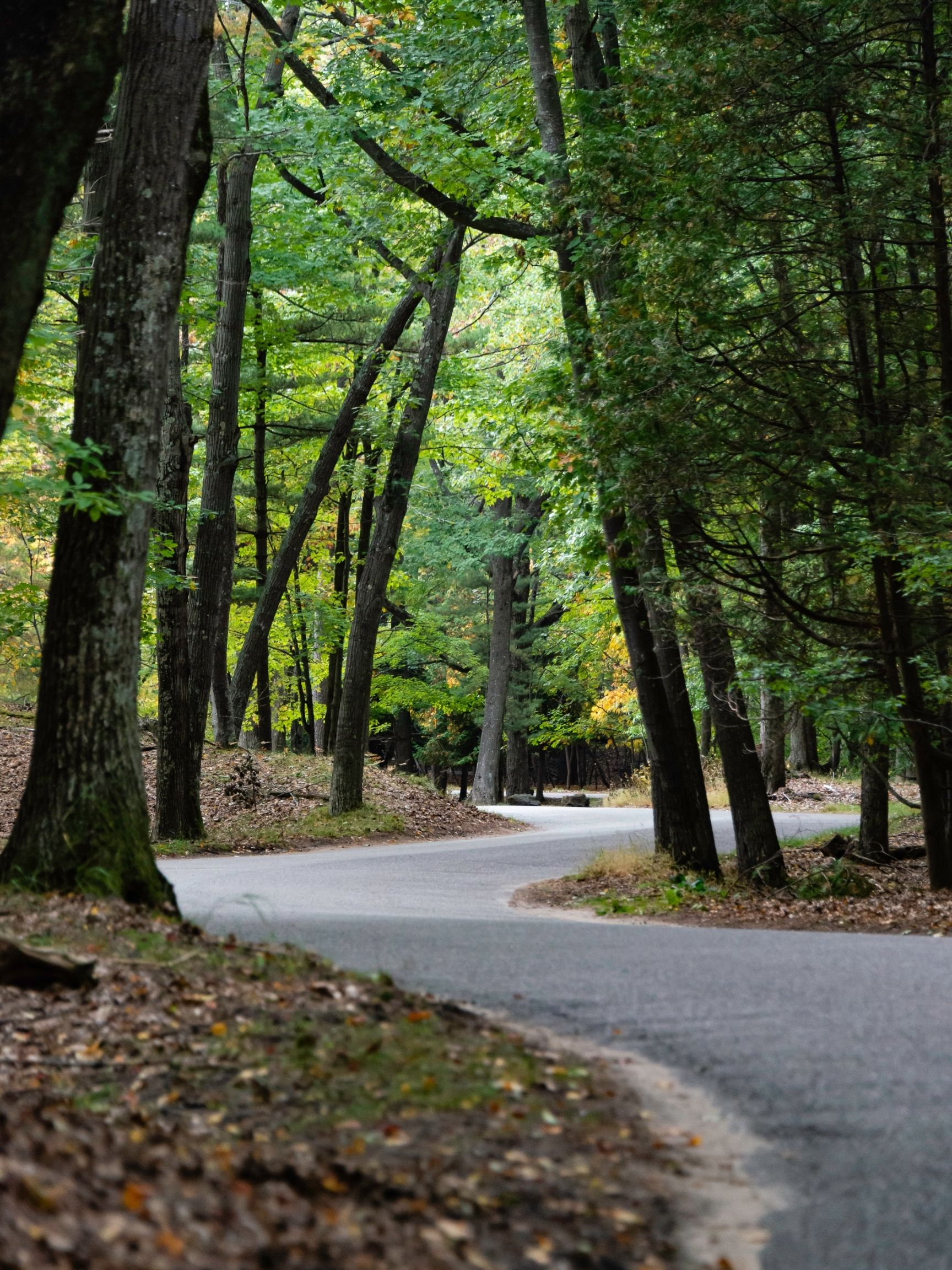 Ludington State Park Roads