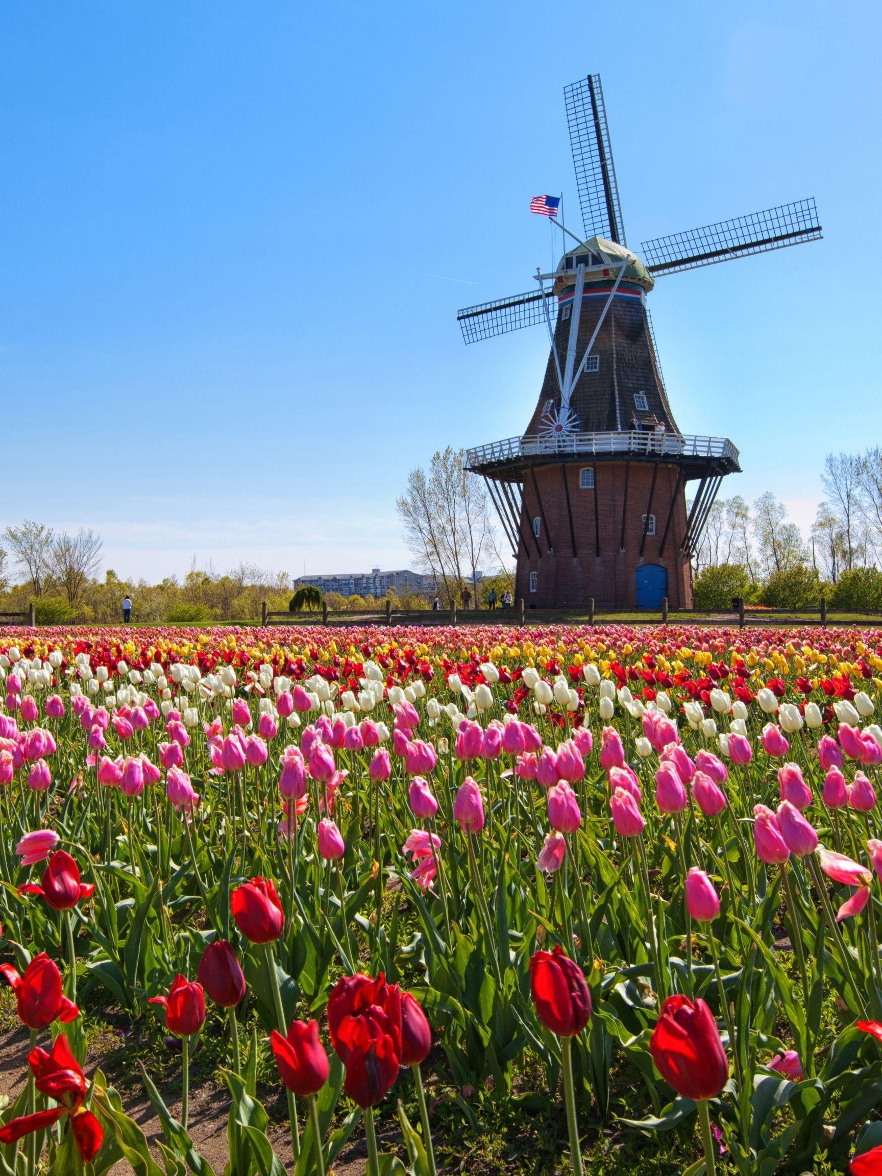 Veldheer Tulip Gardens holland