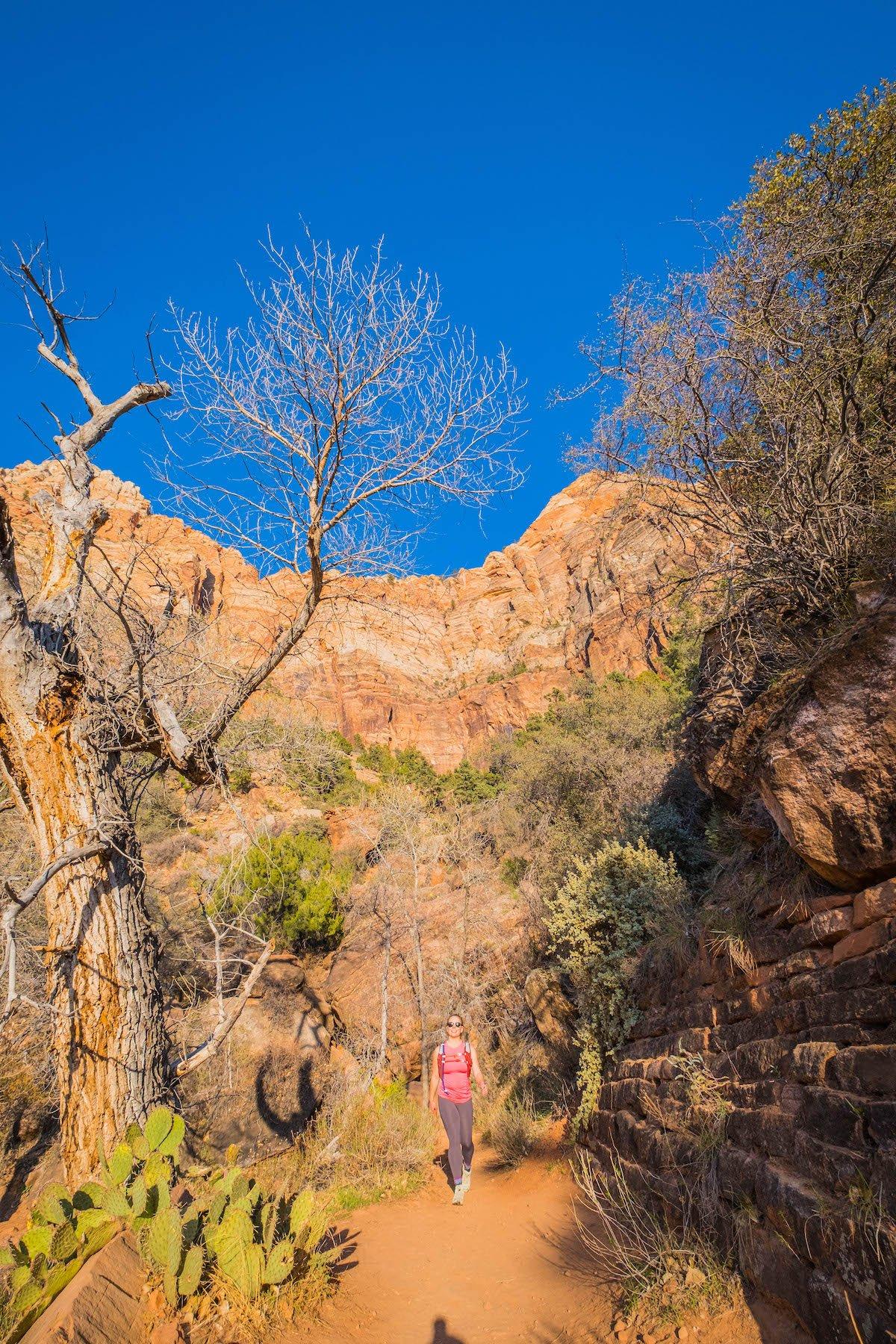 Watchman trail in zion