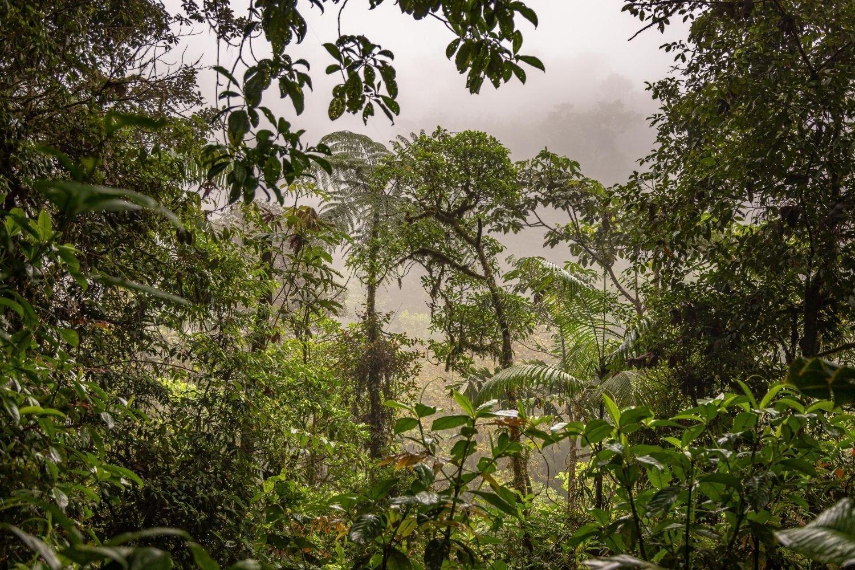 Costa Rican Rainforest After Rainfall