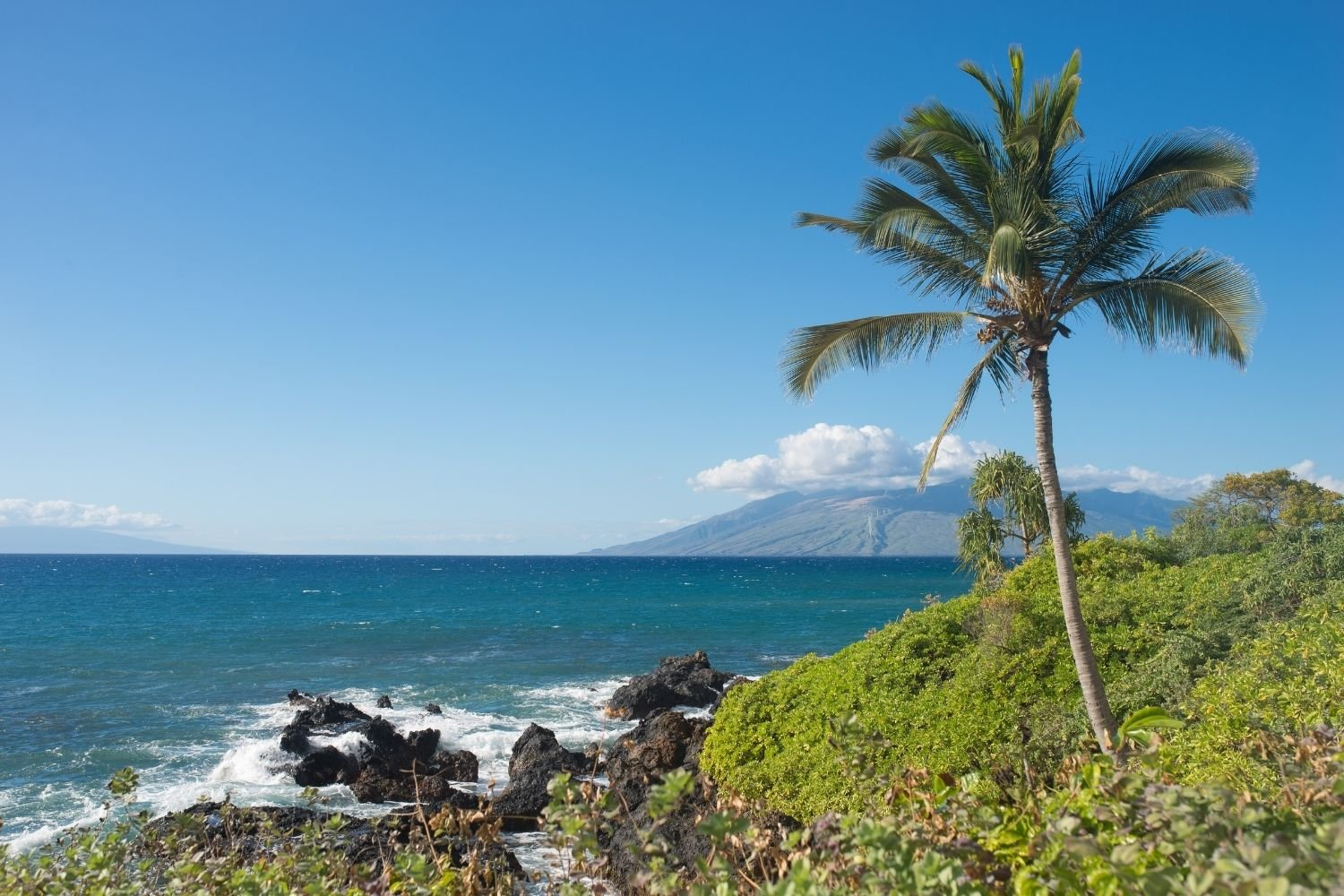 Maui Island landscape with palm tree and ocean
